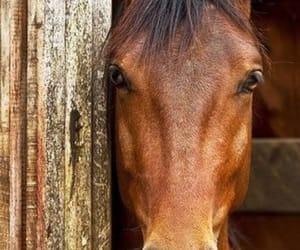 animals, horses, and caballos image