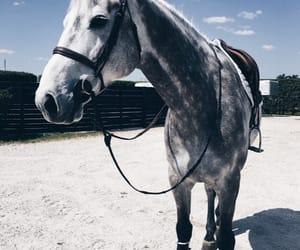 animals, horses, and beautiful image