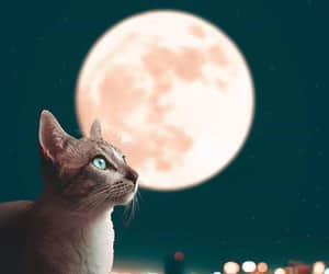 cat, moon, and photography image