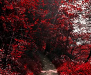 nature, red, and trees image