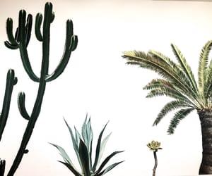 cactus, clean, and desert image