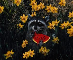 raccoon, flowers, and animal image