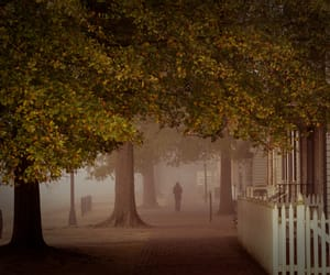 fall, mist, and scenery image