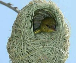 bird, pajaro, and nido image