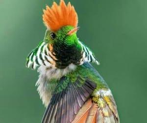 bird, pajaro, and colores image