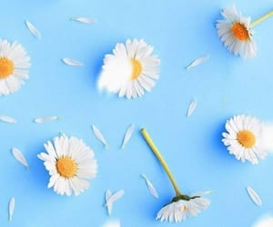 daisy, wallpaper, and blue image