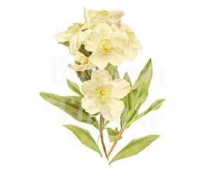 botanical, etsy, and vintage illustration image