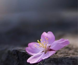 beautiful, wallpaper, and flower image