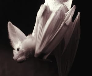 bat, albino, and animal image