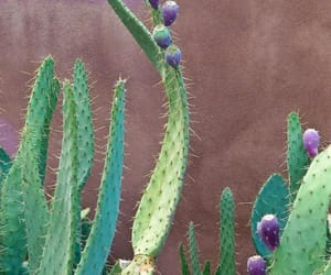 cactus, floral, and lila image