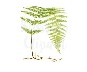 digital print, fern, and botanical print image