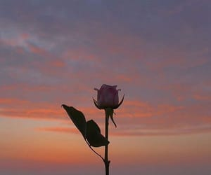 rose, sky, and aesthetic image