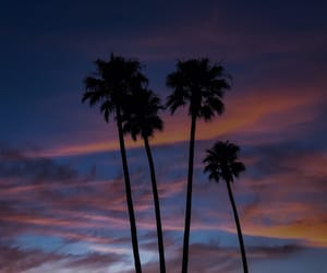 edited, palm tree, and sunset image