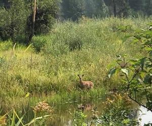 creek, nature, and deer image