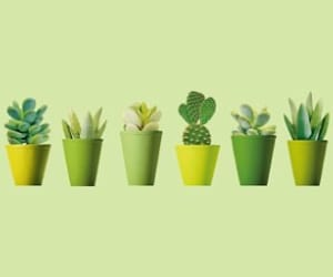 green, header, and plants image