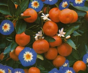 flowers, orange, and fruit image