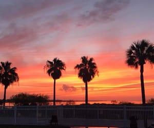 florida, palm trees, and sunset image