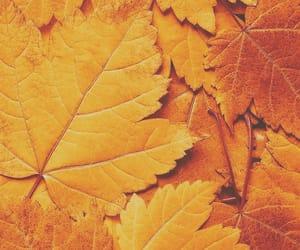 orange, leaves, and autumn image