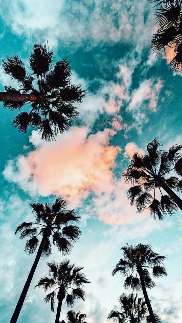 Image About Summer In W A L L P A P E R S By Lixin