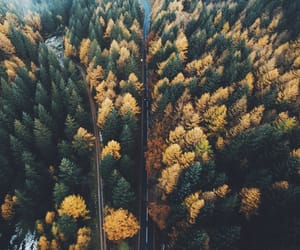 autumn, forest, and inspiration image