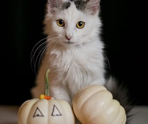 adorable, kitten, and beautiful image