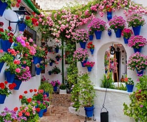 andalucia, beauty, and flowers image