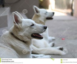 brothers, white dogs, and beauty image