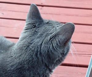 cat, grey, and tumblr image