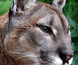 Animales, belleza, and naturaleza image