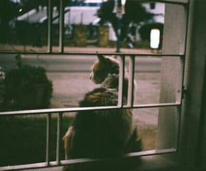 cat, indie, and hipster image