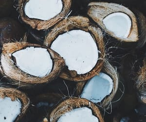 coconut, fiji, and nature image