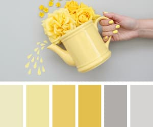 beauty, color, and design image