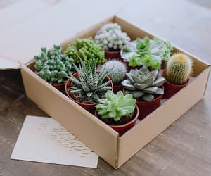 cool, nature, and cactus image