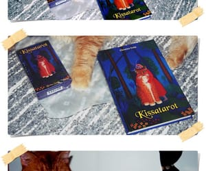 cat, tarot, and pet image