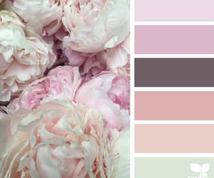 beauty, blush, and color image