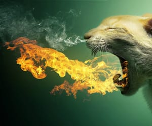cats, fire, and kitty image