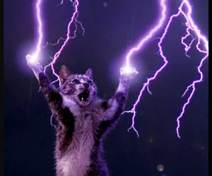 cats, purple, and kitty image