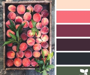 apricot, burgundy, and market image