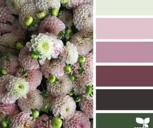 blush, burgundy, and color image