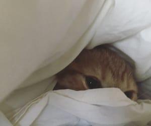 cat and instagram image