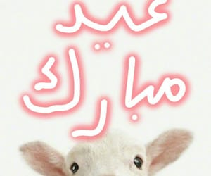 aid, eid, and عيد الاضحى image
