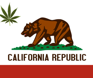california and bear image