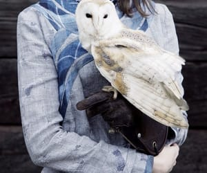 aesthetic, owl, and photography image