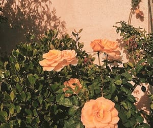 flowers, wallpaper, and 🌺 image