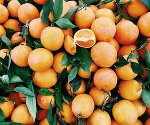 fruit, travel, and orange aesthetic image