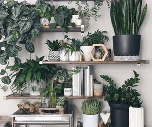 boho, cactus, and flower image