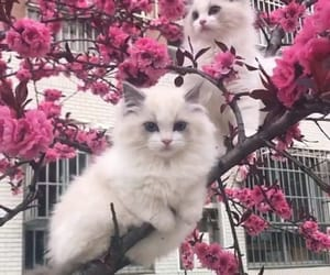 cat, tree, and cut image