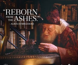 albus dumbledore, rebirth, and daniel radcliffe image