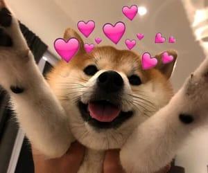 dog, grunge, and cute image