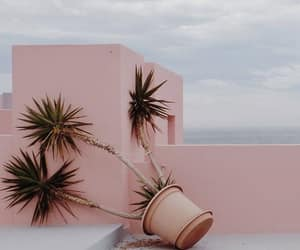 beautiful, pink, and plant image